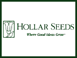 Hollar Seeds (Холлар Сидс)