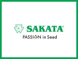 Sakata (Саката)
