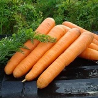 Морковь Маэстро F1 - Семена Тут