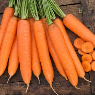 Морковь Сиркана F1 - Семена Тут
