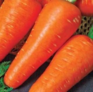 Морковь Рекси - Семена Тут