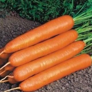 Морковь Нанте - Семена Тут