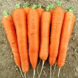 Морковь Колтан F1 - Семена Тут