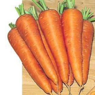 Морковь Карсон F1 - Семена Тут
