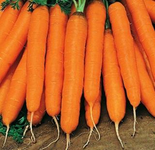 Морковь Сопрано F1 - Семена Тут