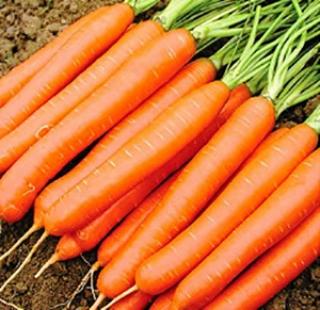 Морковь Навал F1 - Семена Тут