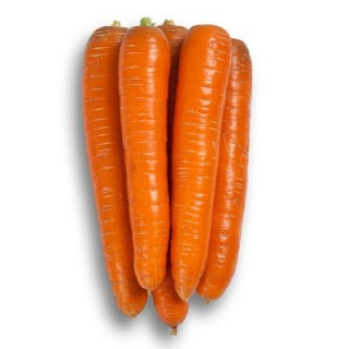 Морковь Морелия F1 - Семена Тут
