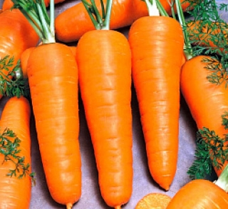 Морковь Болтекс - Семена Тут