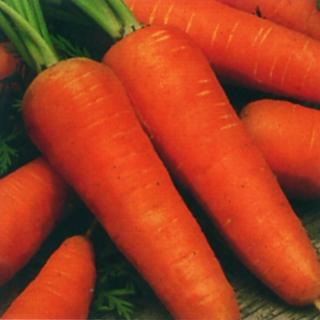 Морковь Шантенэ 2461 - Семена Тут