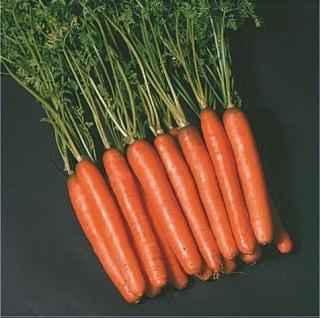 Морковь Нантес 2 Тито - Семена Тут