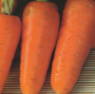 Морковь Шарлотта - Семена Тут