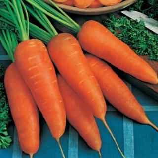 Морковь Кантербюри F1 - Семена Тут