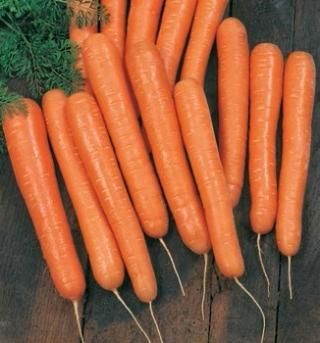 Морковь Волкано F1 - Семена Тут