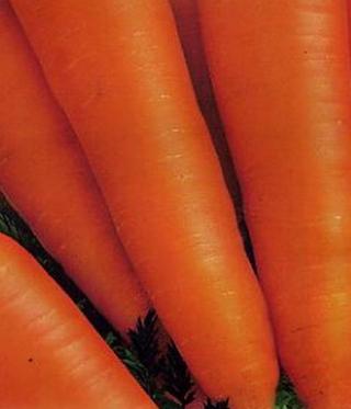 Морковь Алтаир F1 (инкруст. семена) - Семена Тут