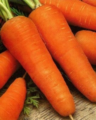 Морковь Шантенэ Роял - Семена Тут