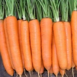 Морковь Норвегия F1 - Семена Тут