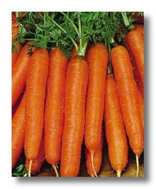 Морковь Ньюкасл F1 - Семена Тут