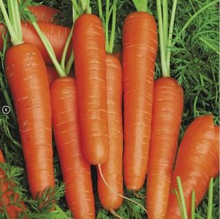 Морковь Спидо F1 - Семена Тут
