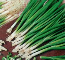 Лук на зелень Лонг Уайт Кошигая