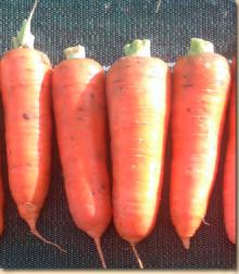 Морковь Курода Пауэр