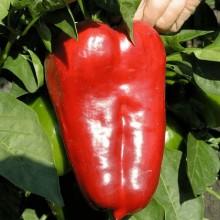 Перец сладкий Полет - Семена Тут