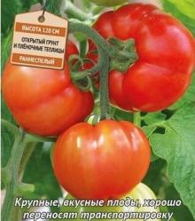 Томат Изящный F1 (инкруст. семена) - Семена Тут