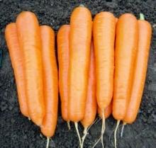 Морковь Аттилио F1