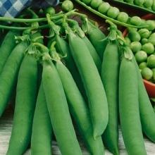 Горох овощной Кельведонское чудо - Семена Тут