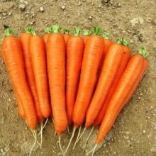 Морковь Лагуна F1