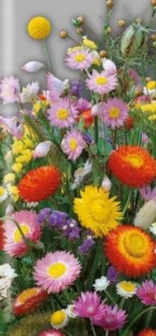 Сухоцветы Застывшая музыка - Семена Тут