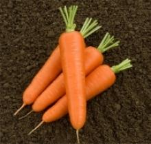 Морковь Олимпо F1 - Семена Тут