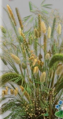 Сухоцветы Злаковые - Семена Тут