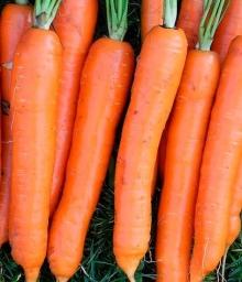 Морковь Осенний король - Семена Тут
