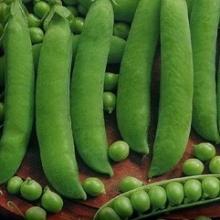 Горох овощной Премиум - Семена Тут