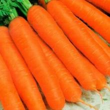 Морковь Нептун F1 - Семена Тут