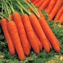 Морковь Рогнеда - Семена Тут