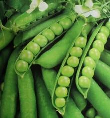 Горох овощной Прима - Семена Тут