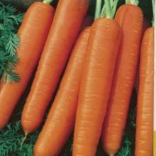 Морковь Ройал Форто (обработано тирамом) - Семена Тут