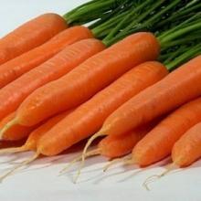 Морковь Джерада F1 - Семена Тут