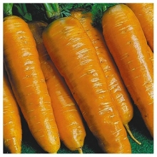 Морковь Тушон - Семена Тут