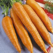Морковь Флакке Агрони - Семена Тут
