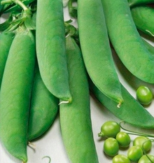 Горох овощной Альфа-2 - Семена Тут