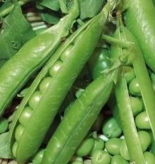 Горох овощной Адагумский - Семена Тут