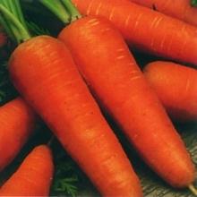 Морковь Шантанэ 2461 - Семена Тут