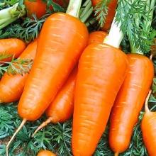 Морковь Ред Кор - Семена Тут