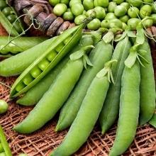 Горох овощной Глориоза - Семена Тут