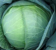Гейхера гибридная Бинош (С2) (лист темно-фиолетовый, матовый)