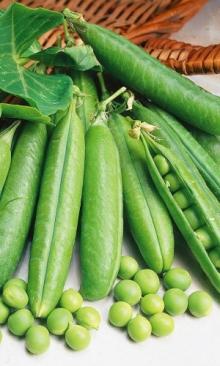 Горох овощной Юрга - Семена Тут