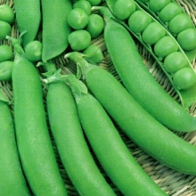Горох Авола овощной - Семена Тут