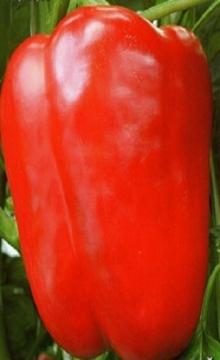 Перец сладкий Бирюза - Семена Тут